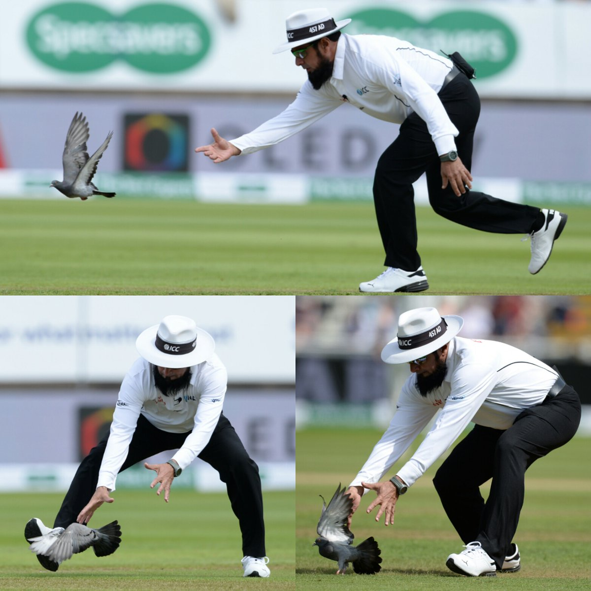 ENG vs IND: OMG: ऐसा क्या हुआ जो मैच में अंपायरिंग करना छोड़ कबूतर पकड़ने निकल पड़े अम्पायर अलीम डार