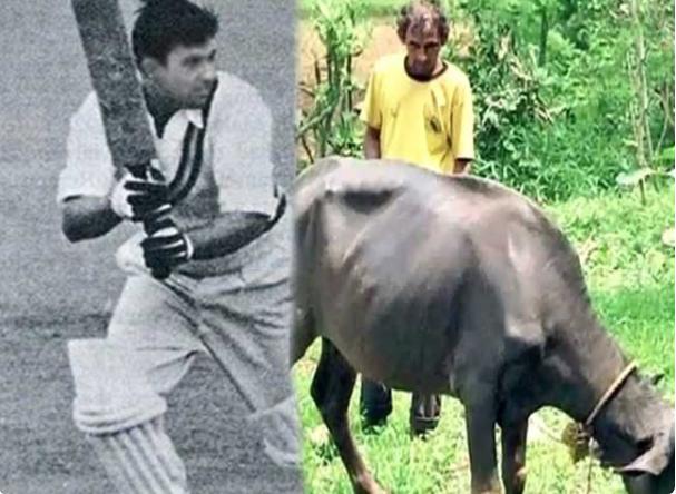 भारत को विश्व विजेता बनाने वाला यह क्रिकेटर अब जीविका चलाने के लिए भैंस चराना किया शुरू 10