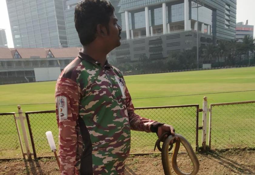 रणजी ट्रॉफी 2019-20: मुंबई-कर्नाटक मैच के अंतिम दिन मैदान पर मिले दो सांप फिर हुआ कुछ ऐसा 1