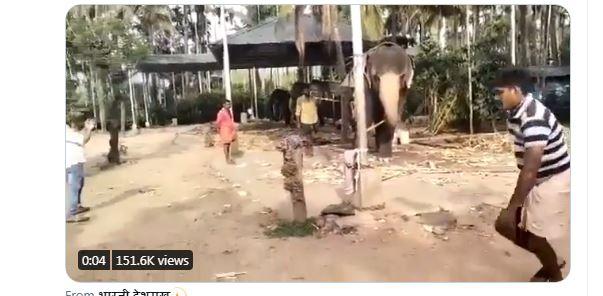 WATCH : बल्लेबाजी करता नजर आया हाथी, वीडियो देख हर कोई हैरान 2