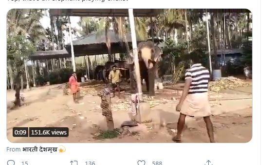WATCH : बल्लेबाजी करता नजर आया हाथी, वीडियो देख हर कोई हैरान 5