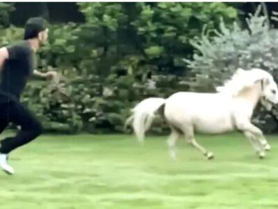 वीडियो : महेंद्र सिंह धोनी अपने घोड़े के साथ रेस लगाते आए नजर, जाने किसे मिली जीत 9